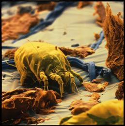 Come combattere l 39 allergia all 39 acaro della polvere blog - Allergia acari materasso ...