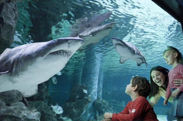 aquario-cattolica