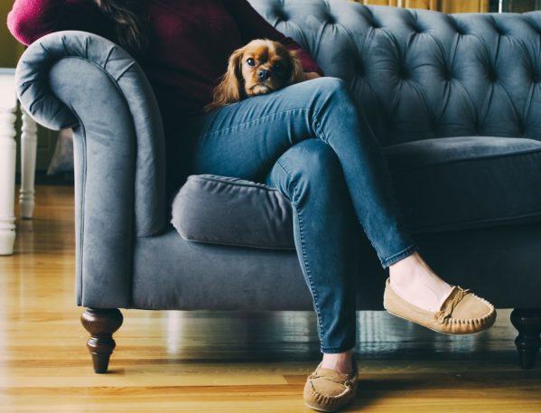 Come tenere pulita la casa quando ci sono animali domestici