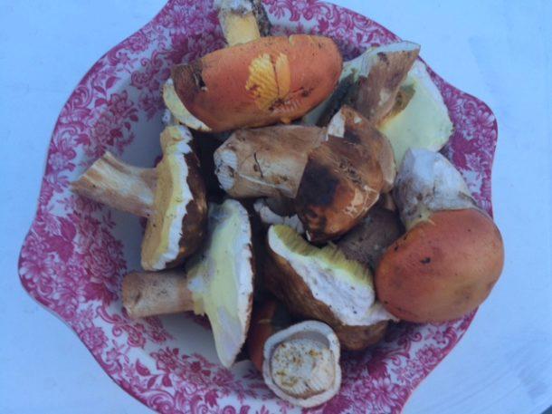 ricette con i funghi porcini